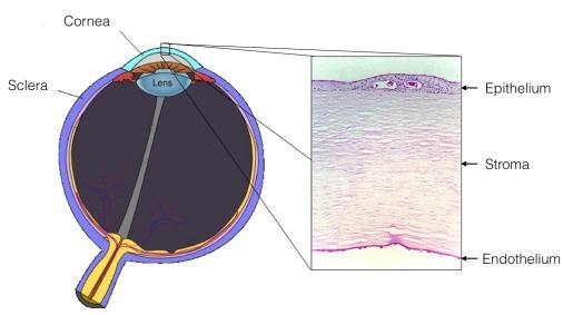 fuchs-diagram-2-001